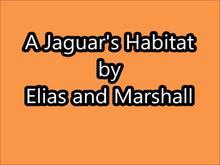 A Jaguar's Habitat