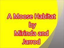 A Moose Habitat