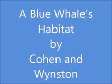 A Blue whale's Habitat