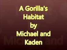 A Gorilla's Habitat